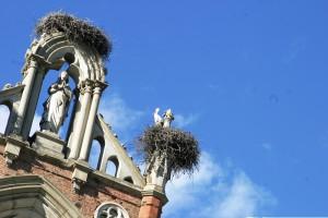 Le cicogne nel Castello di Racconigi